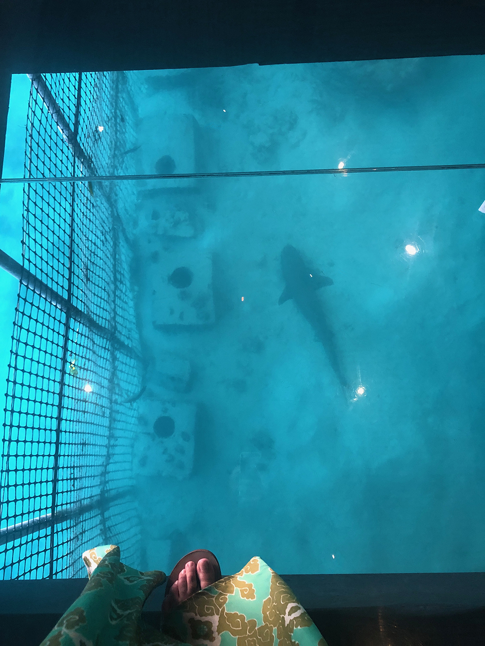 Watch the sharks and sea life swim beneath glass panels in the restaurant's floor.