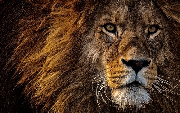 Zoo-Lion-600x375.jpg