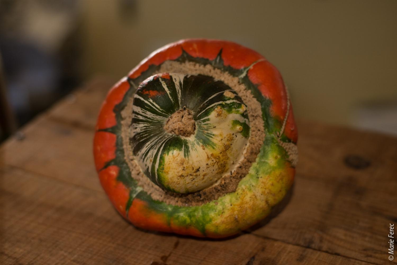 Le giraumon - d'aspect bariolé et boursouflé, il est aussi appelé turban d'Aladin. Sa chair sucrée est onctueuse et un peu farineuse une fois cuite. Aux Antilles, il est consommé cru, en salade ou en chatini (chutney épicé). Version sucrée : en tatin !