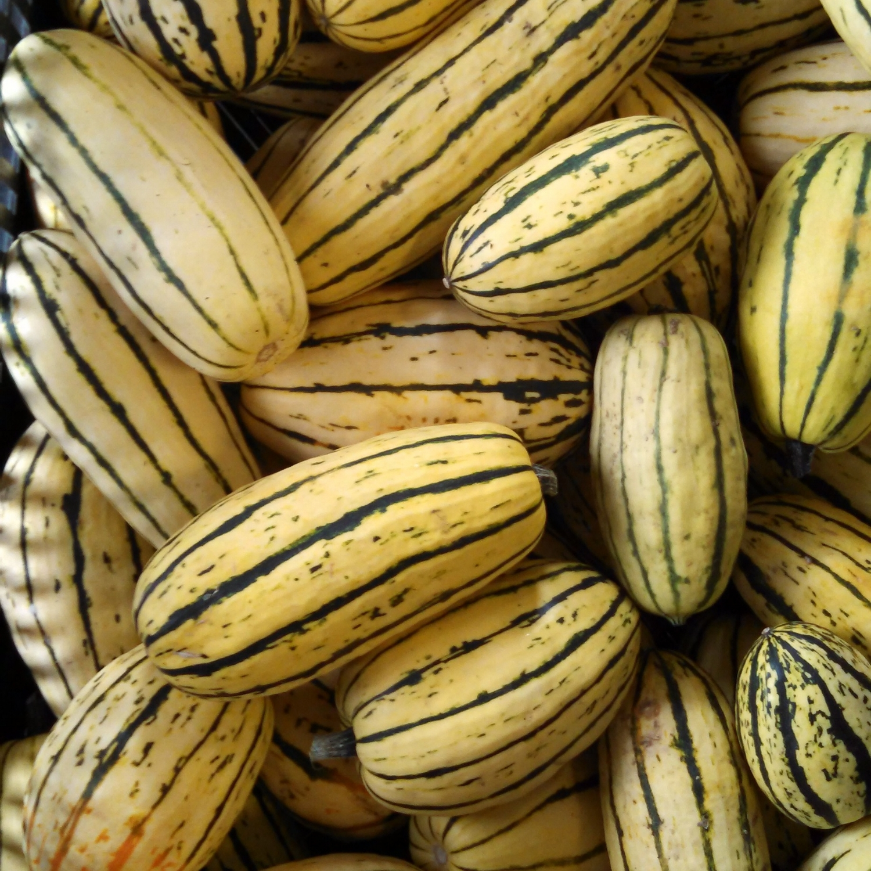 La délicata - a une chair jaune, douce et légèrement farineuse ; sa saveur rappelle celle de la noisette et la châtaigne. Elle est délicieuse au four : rôtie au miel ou farcie et gratinée