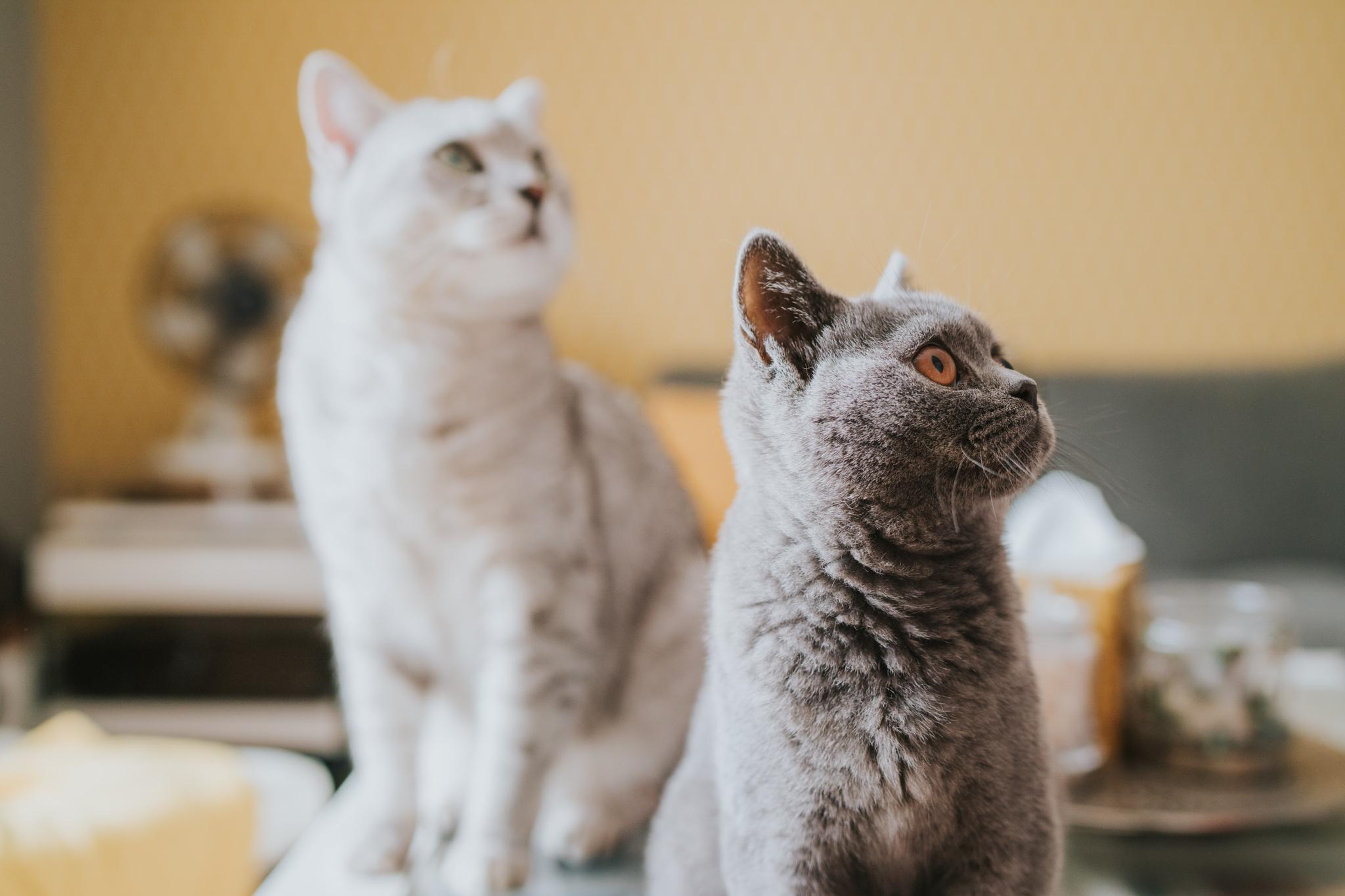 chara-neil-at-home-pre-wedding-session-cats-coalhouse-fort-grace-elizabeth-colchester-essex-alternative-wedding-lifestyle-photographer-essex-suffolk-norfolk-devon (6 of 47).jpg