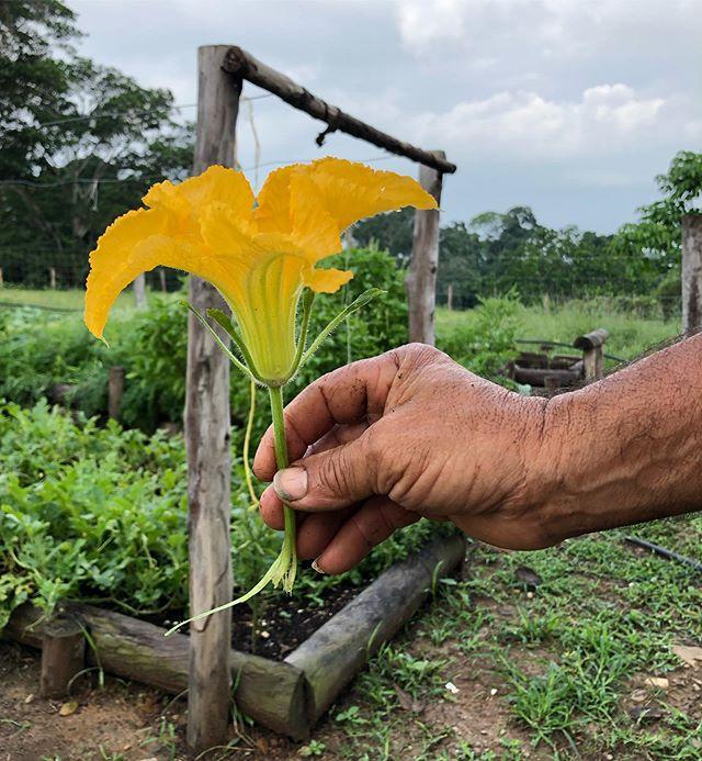 ¡La belleza del trabajo que hagamos y lo nutritivo que puede ser está en nuestras manos!  #ConstruyendoNispero #NuevaEconomía