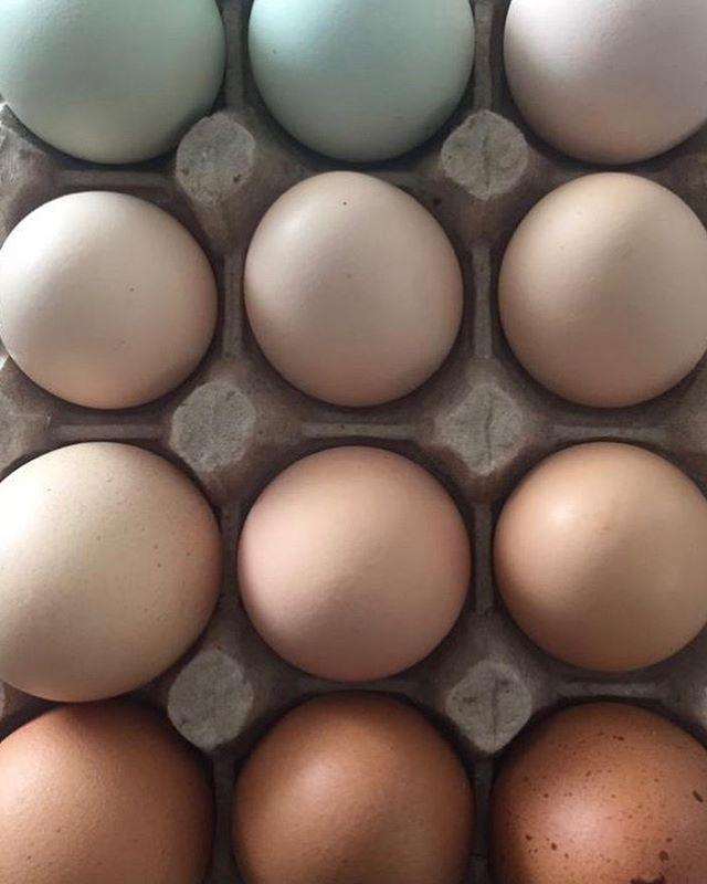 ¡Que bonita mañana! ¿Te gustaría desayunar con alguno de estos huevos de las gallinas criadas en libertad? Créannos que sus respuestas ayudan a sumar!  #NuevaEconomia #Organico #🥚