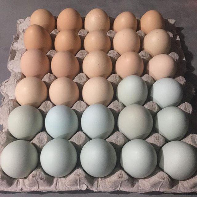 It's happening!  Huevos de gallinas criadas en libertad 🐓, nos han preguntado dónde comprarlos en Caracas; estamos explorando las vías! Si te interesa ser de los primeros y quieres que te hagamos saber cuándo estén disponibles solo déjanos un comentario y te guardamos!  #🥚