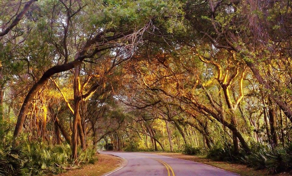 Canopy road.jpg