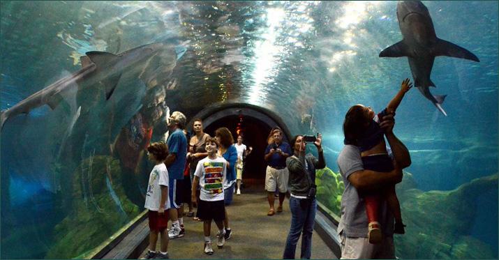 Adventure-Aquarium.jpg