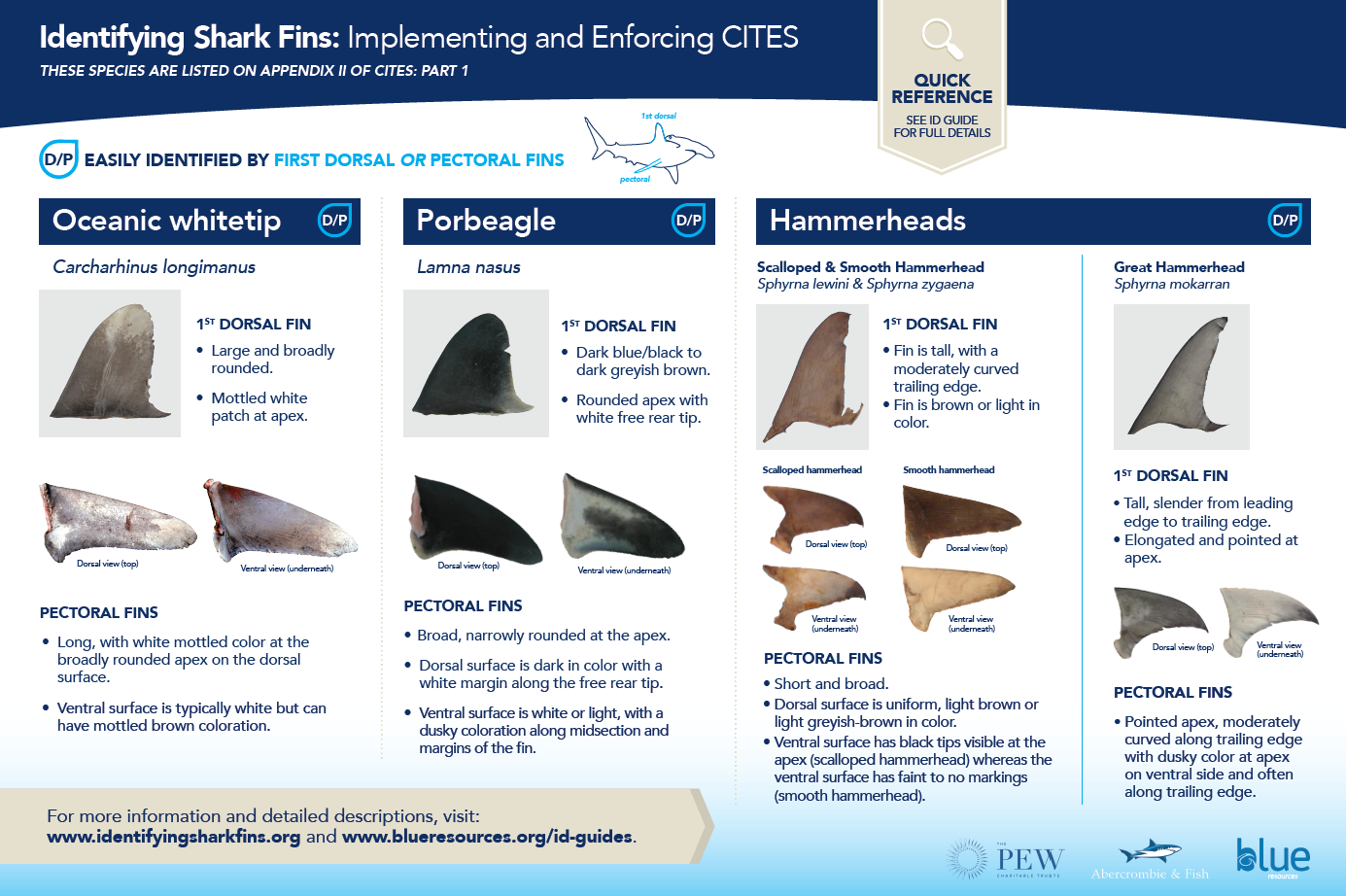 - Poster 1 shows key points to look for when identifying oceanic whitetip, porbeagle and hammerhead shark (scalloped, smooth and great) fins, both dorsal and pectoral.