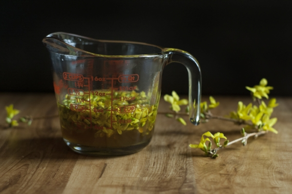 Foraged forsythia syrup and forsythia cocktail recipe