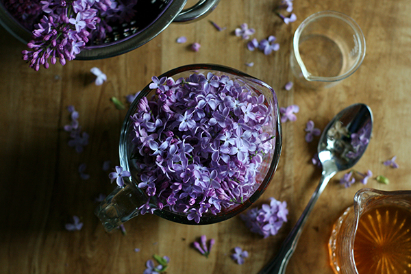 Foraged Cocktails: Making Lilac Liqueur