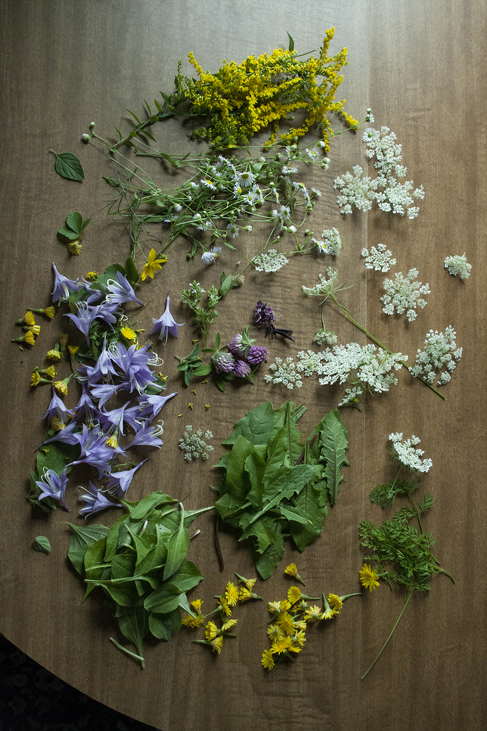 Top center: Goldenrod, below that is Fleabane (white daisy-like flowers). Right: Queen Anne's Lace (white, lacy flowers and spiky leaves). Bottom: Yellow hawkweed, Plantain leaf. Center: Red clover, Basil flower, Dandelion leaves. Left: Purple hosta blossoms.
