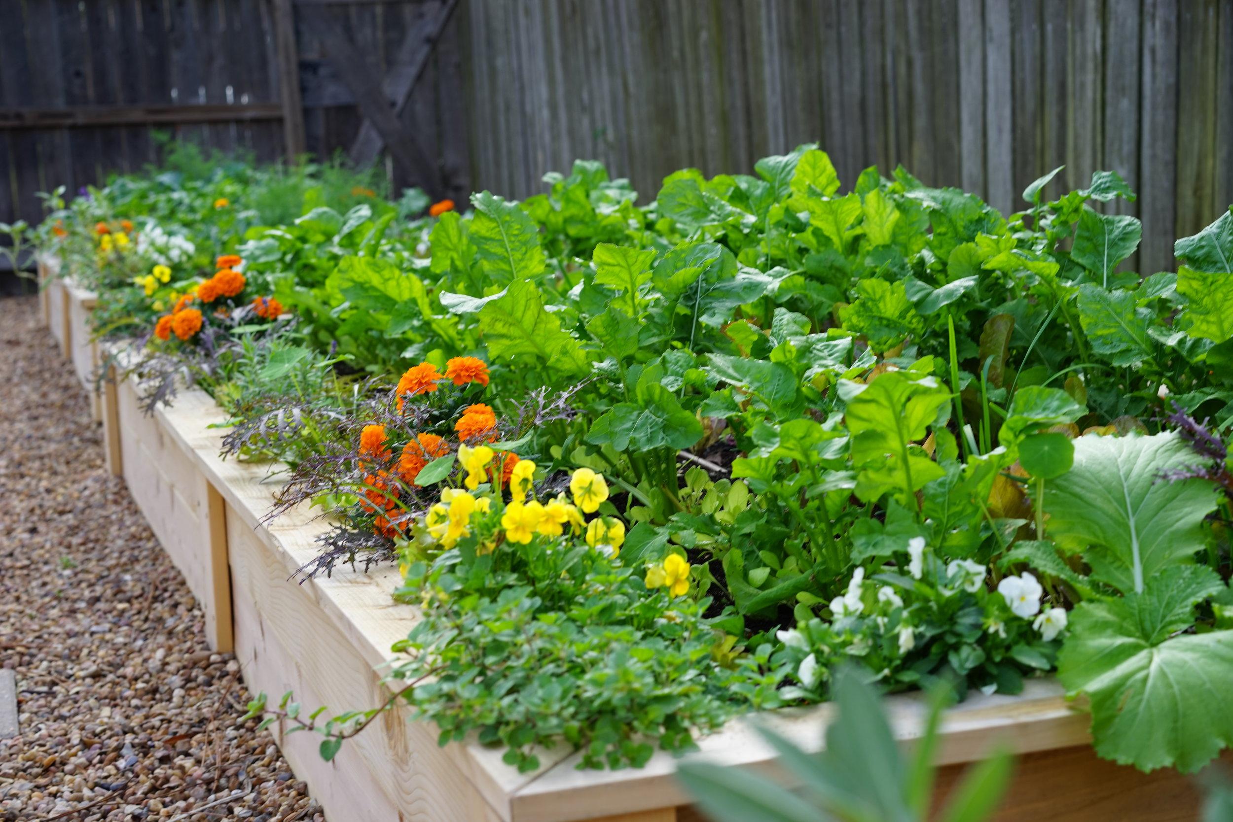 Learn to Grow Salad -