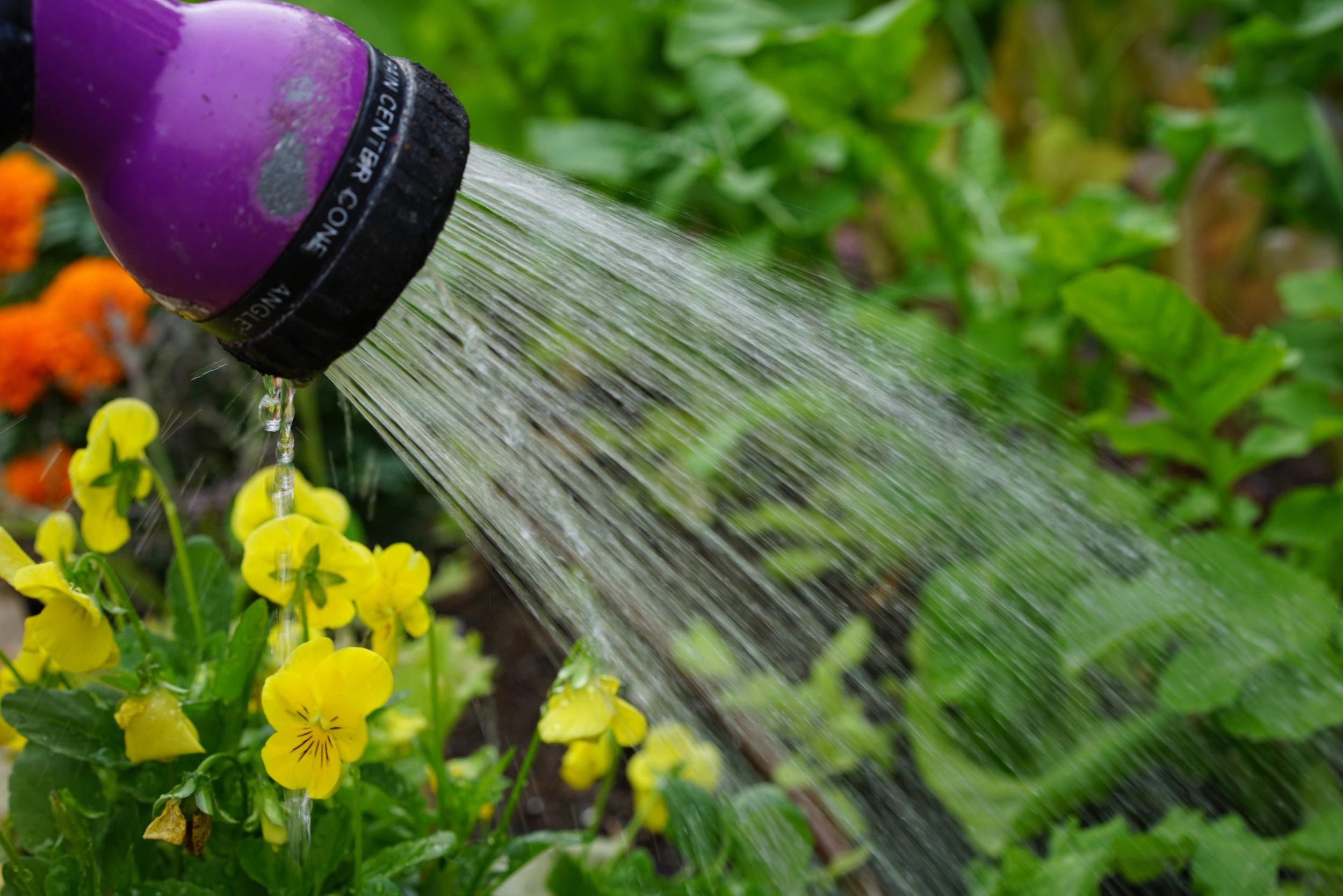 watering a kitchen garden