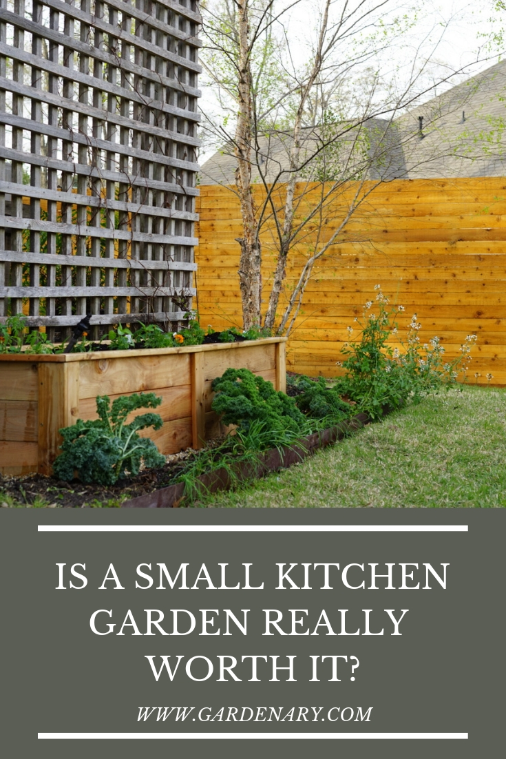 Is a Small Kitchen Garden Really Worth It?.jpg