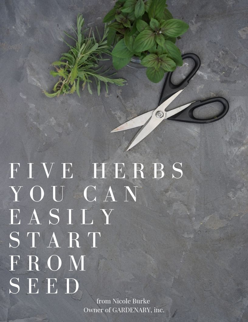 FIVE HERBS YOU CAN START EASILY FROM SEED.jpg