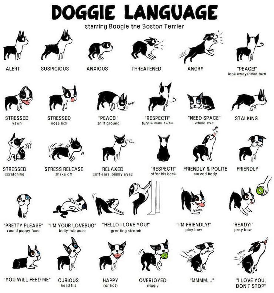 Doggie-Language.jpg