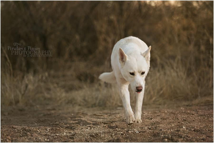 Pirates-Pixies-Photography-Tucson-photographer_0018.jpg