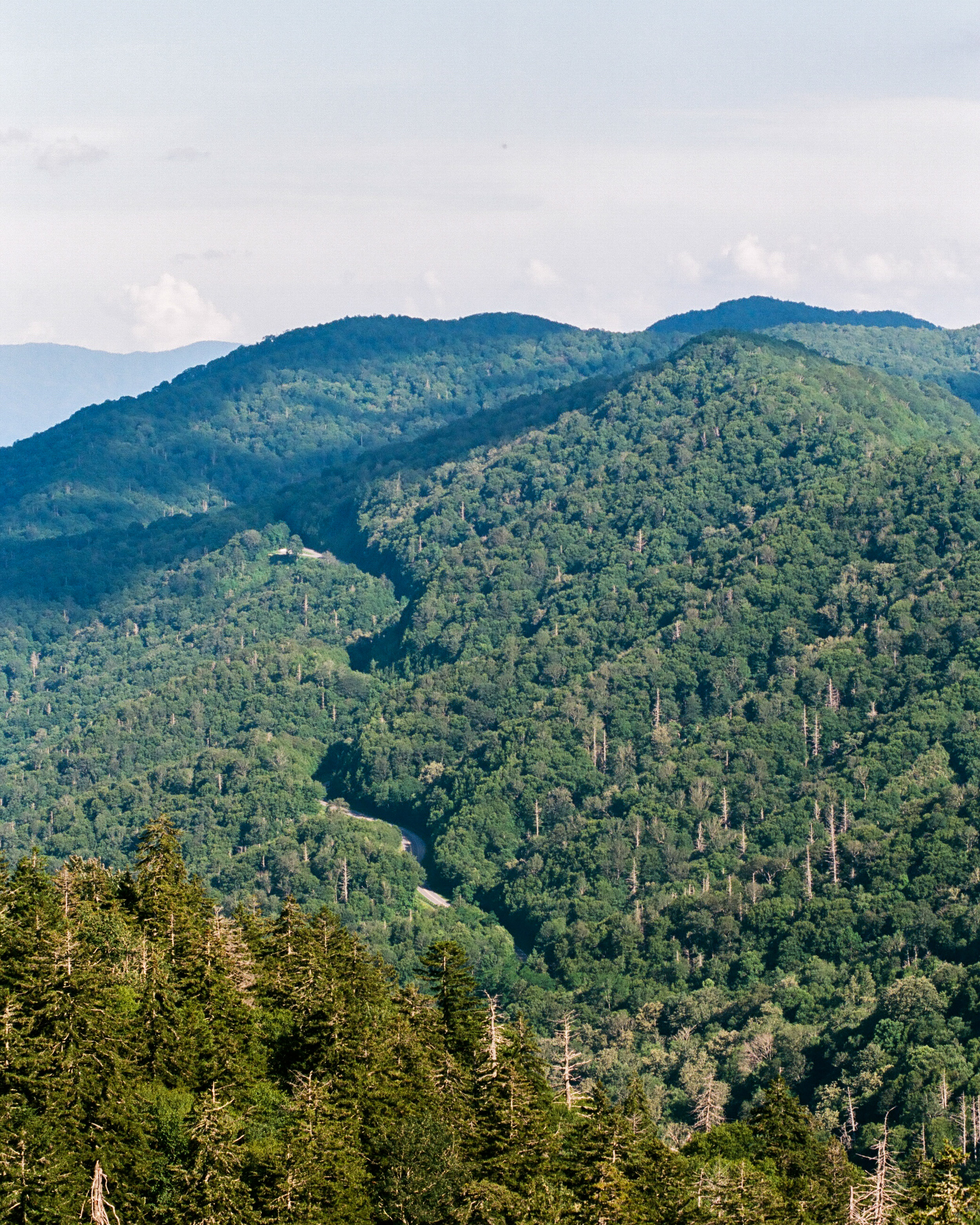 Smoky Mountains Series-9.jpg