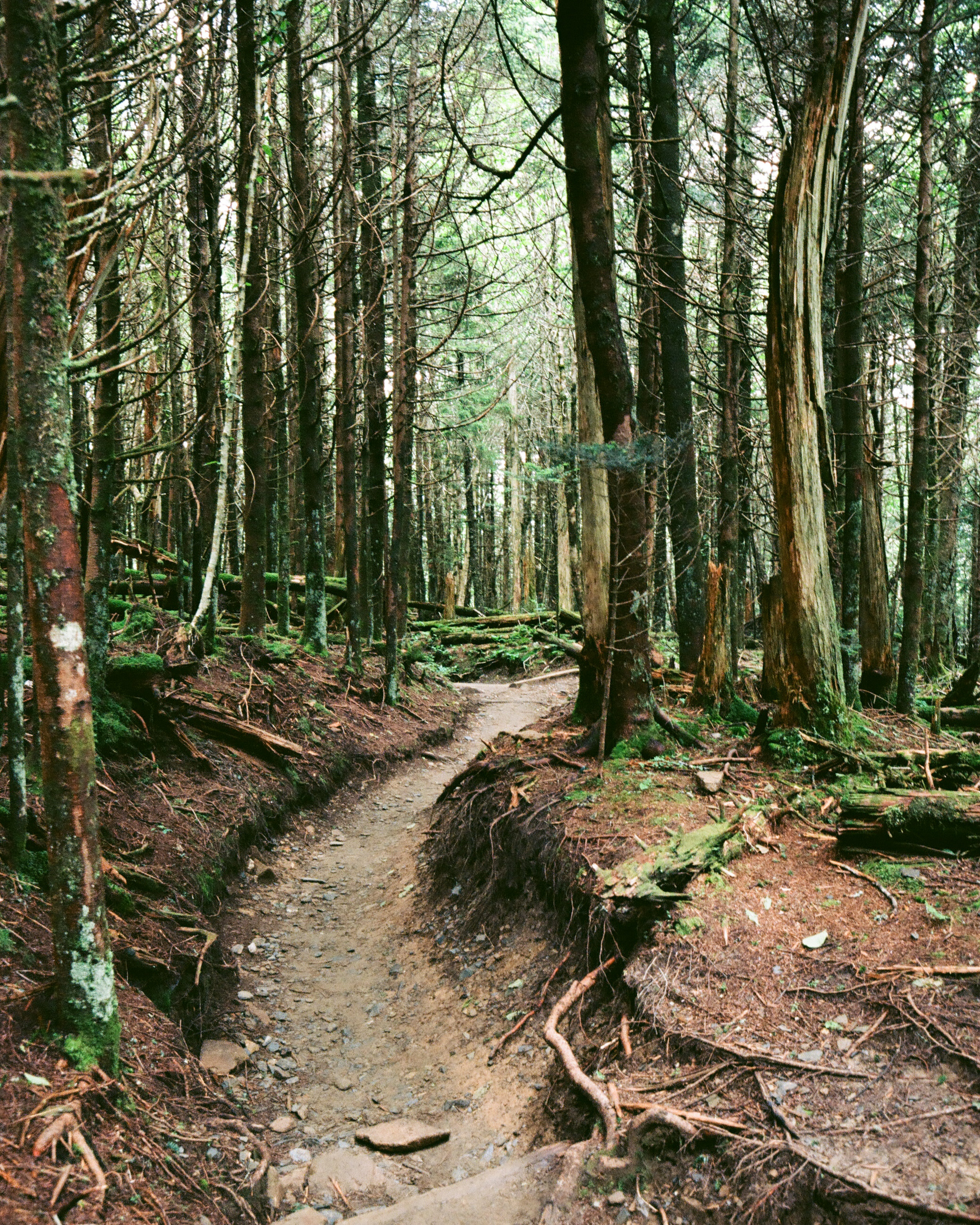 Smoky Mountains Series-10.jpg