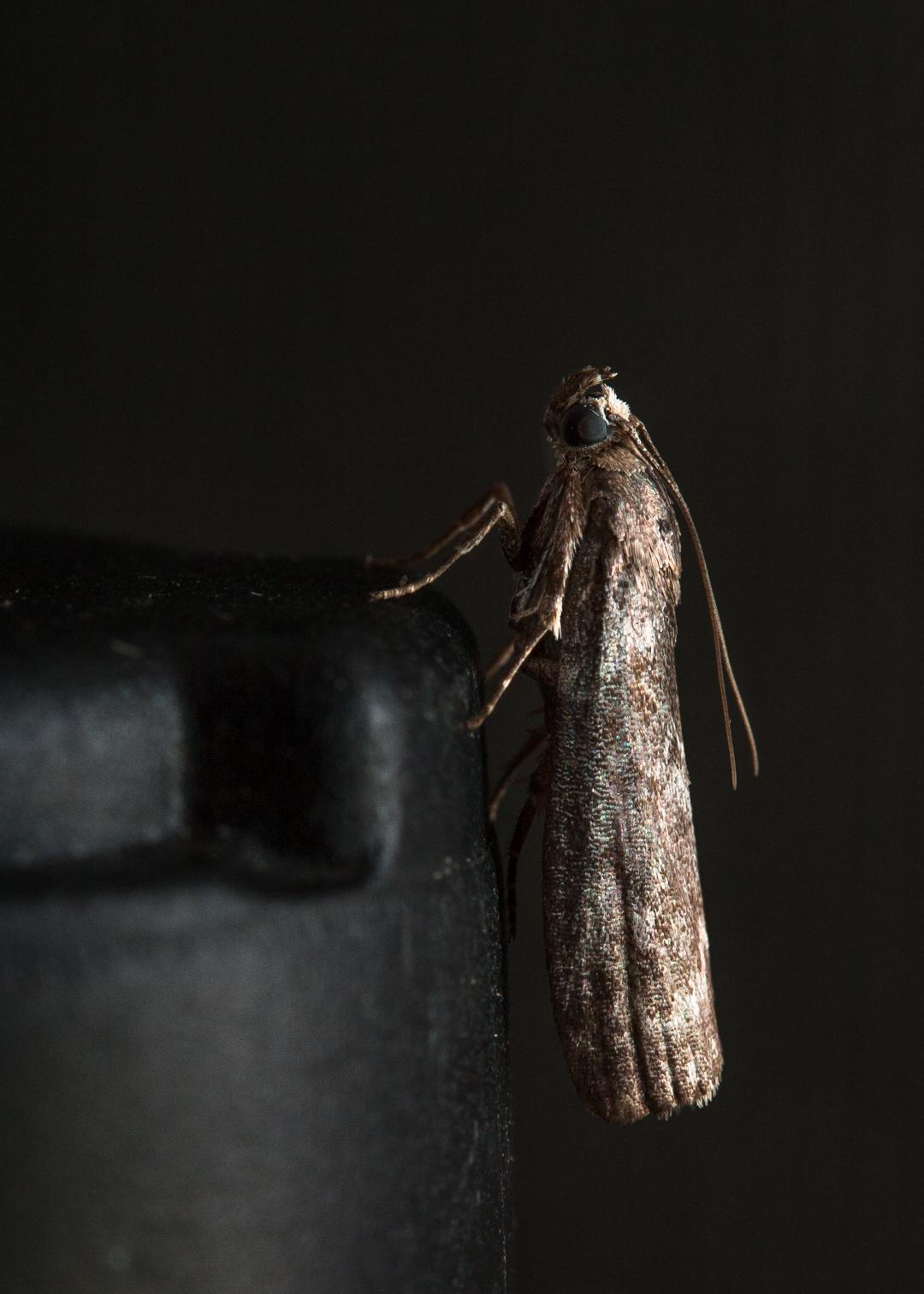 Image taken using flash with daylight setting