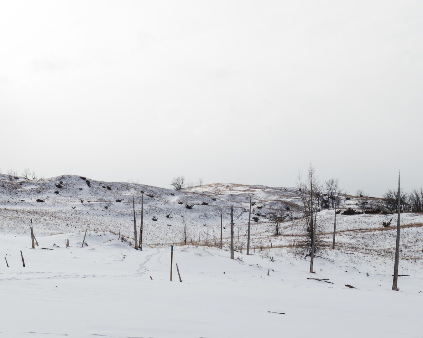 This one too is overexposed, but this time I did so to create contrast between the snow and the tree trunks. It helps to make the photograph more about the shape of the plants and the dunes, more than the actual landscape