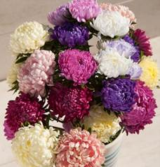 china aster-tower mix.jpg