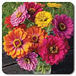 zinnia-county fair mix.jpg