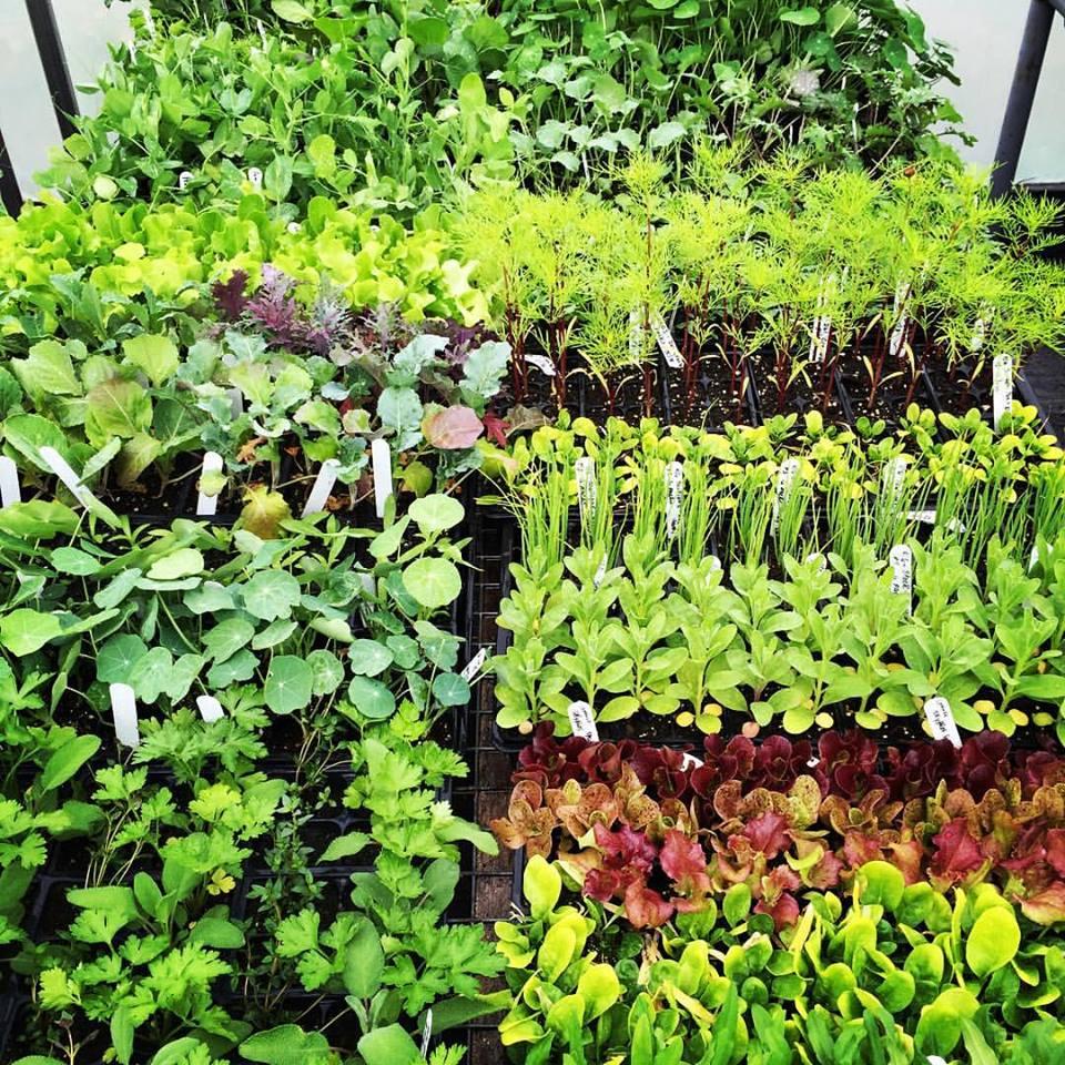 - Garden Packages
