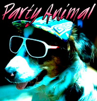 party animal.PNG