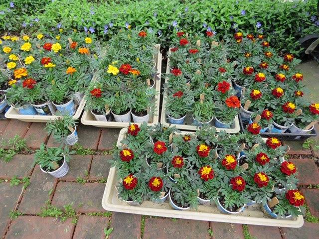 Plant Sale 2.jpg