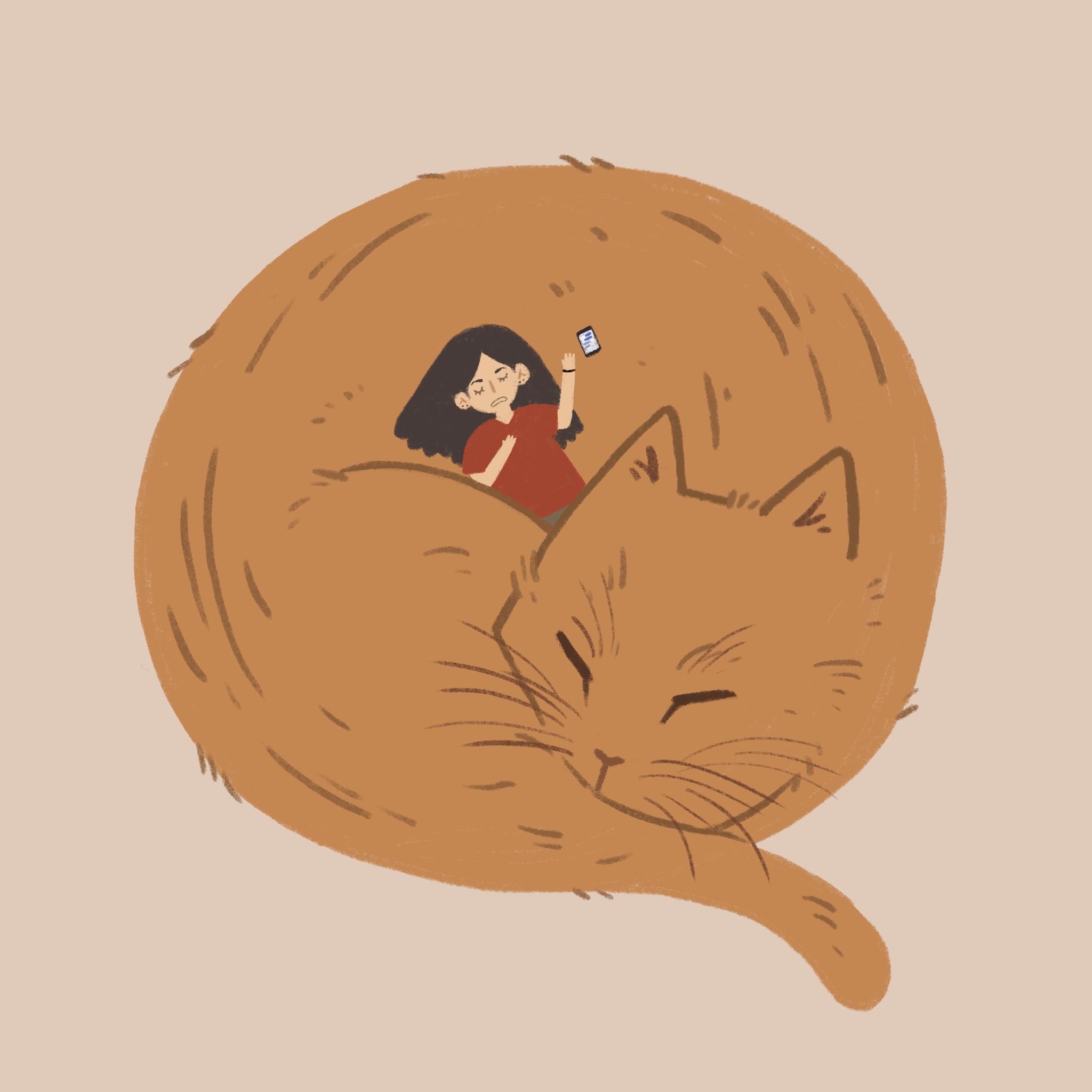 cozy cat.jpg