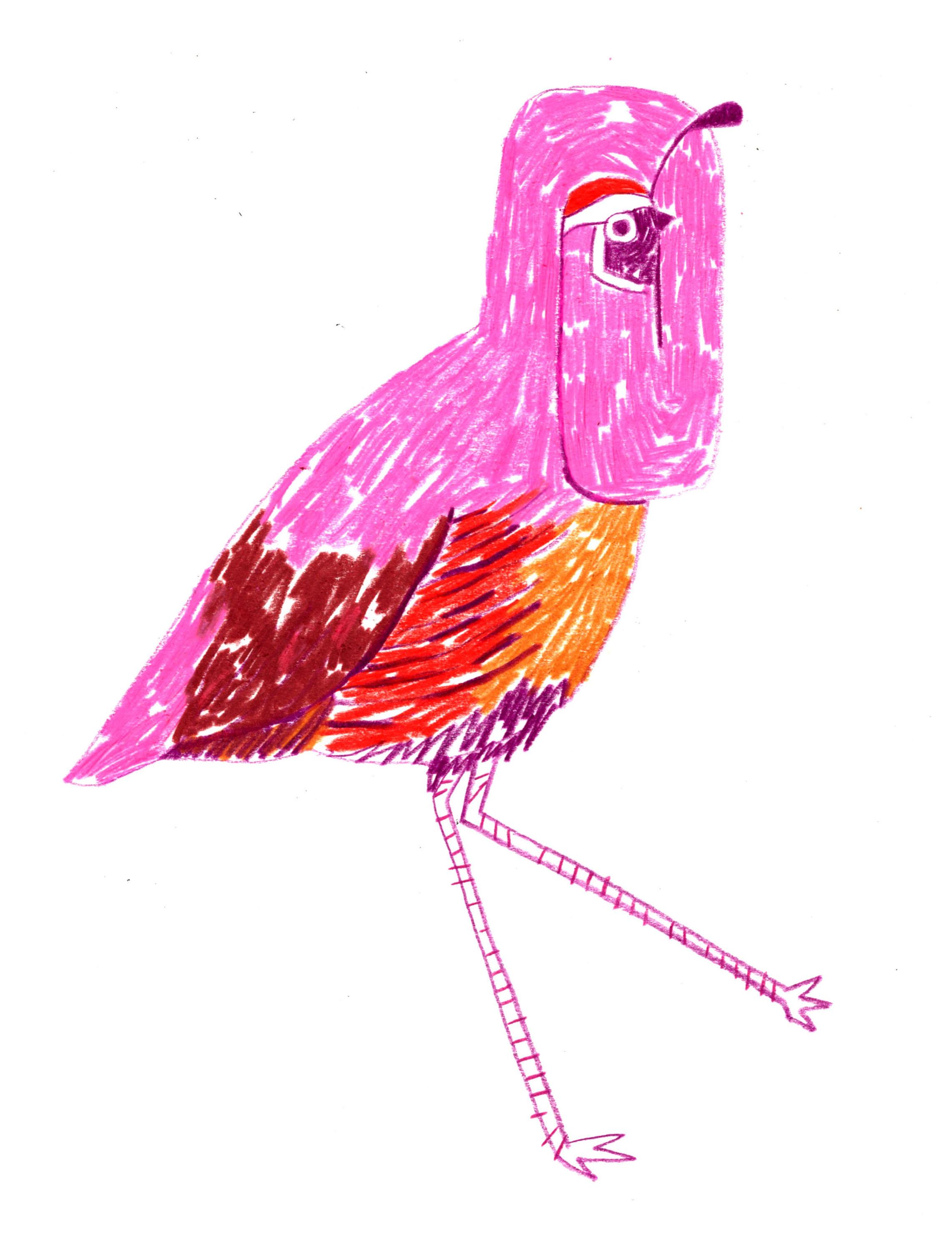 quail boi.jpeg