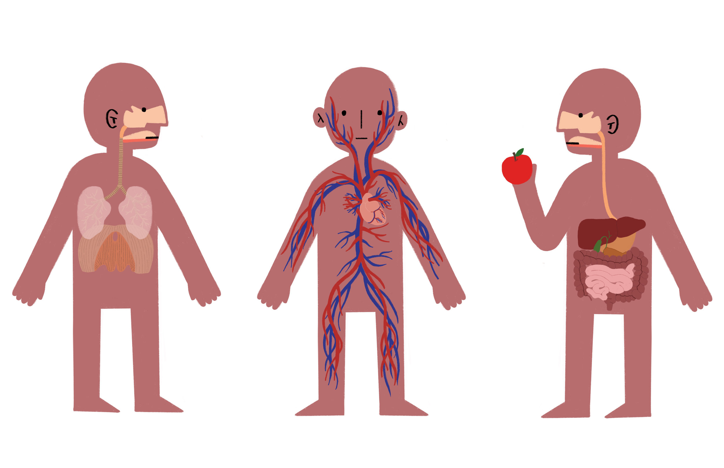 body systems_fr.jpg