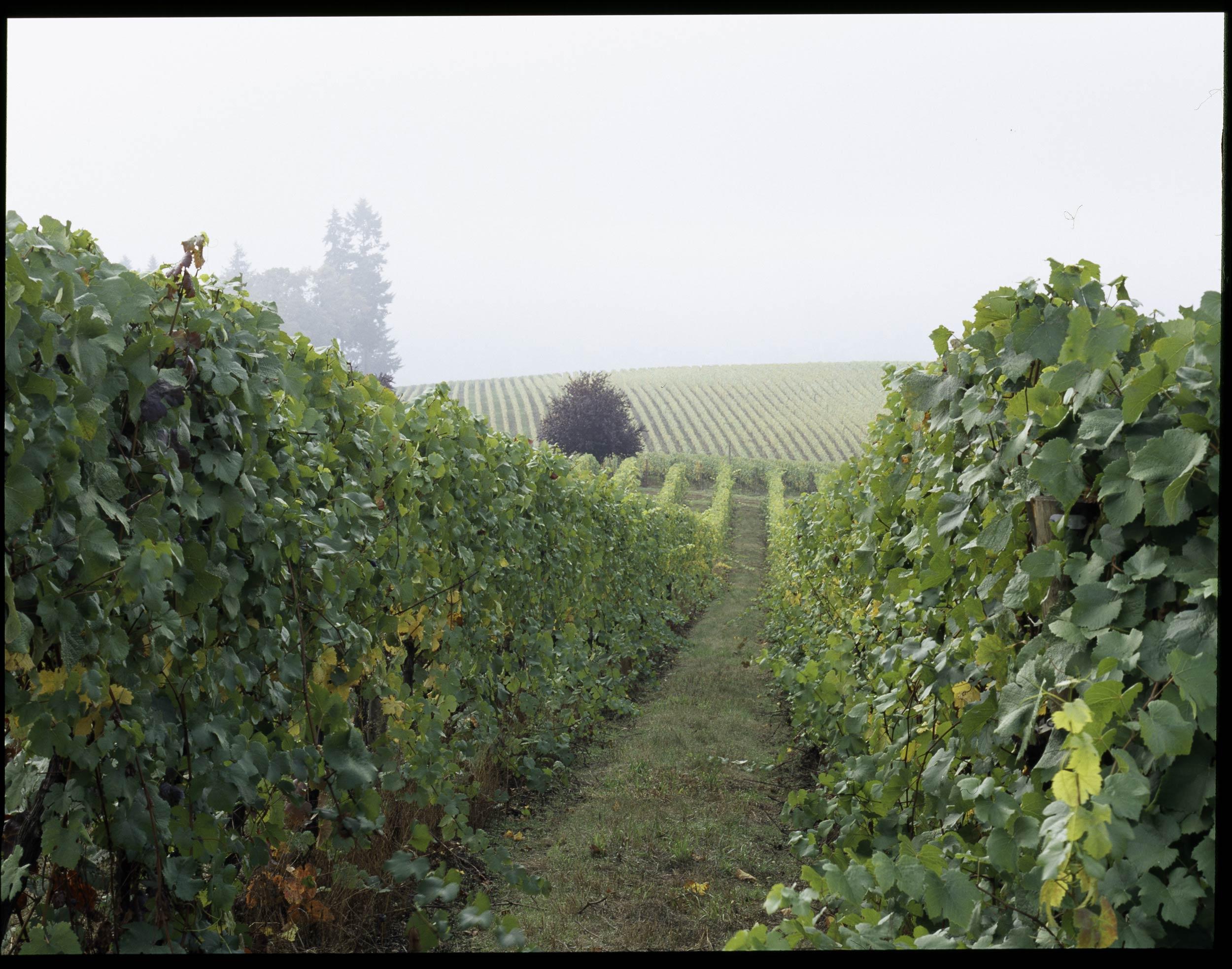 2005208_09.jpg