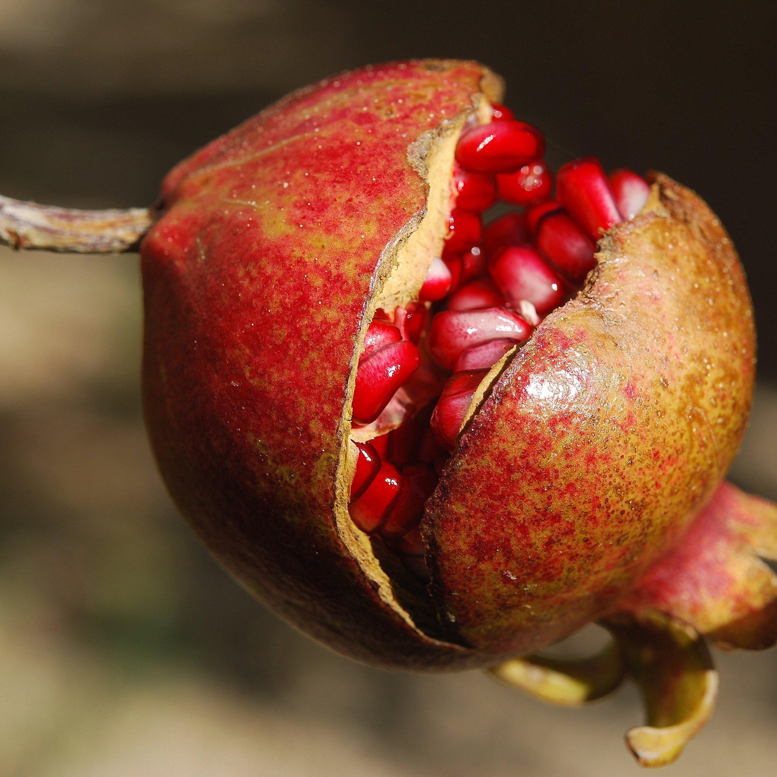 pomegranate-fruit-flower-exotic-65949.jpeg