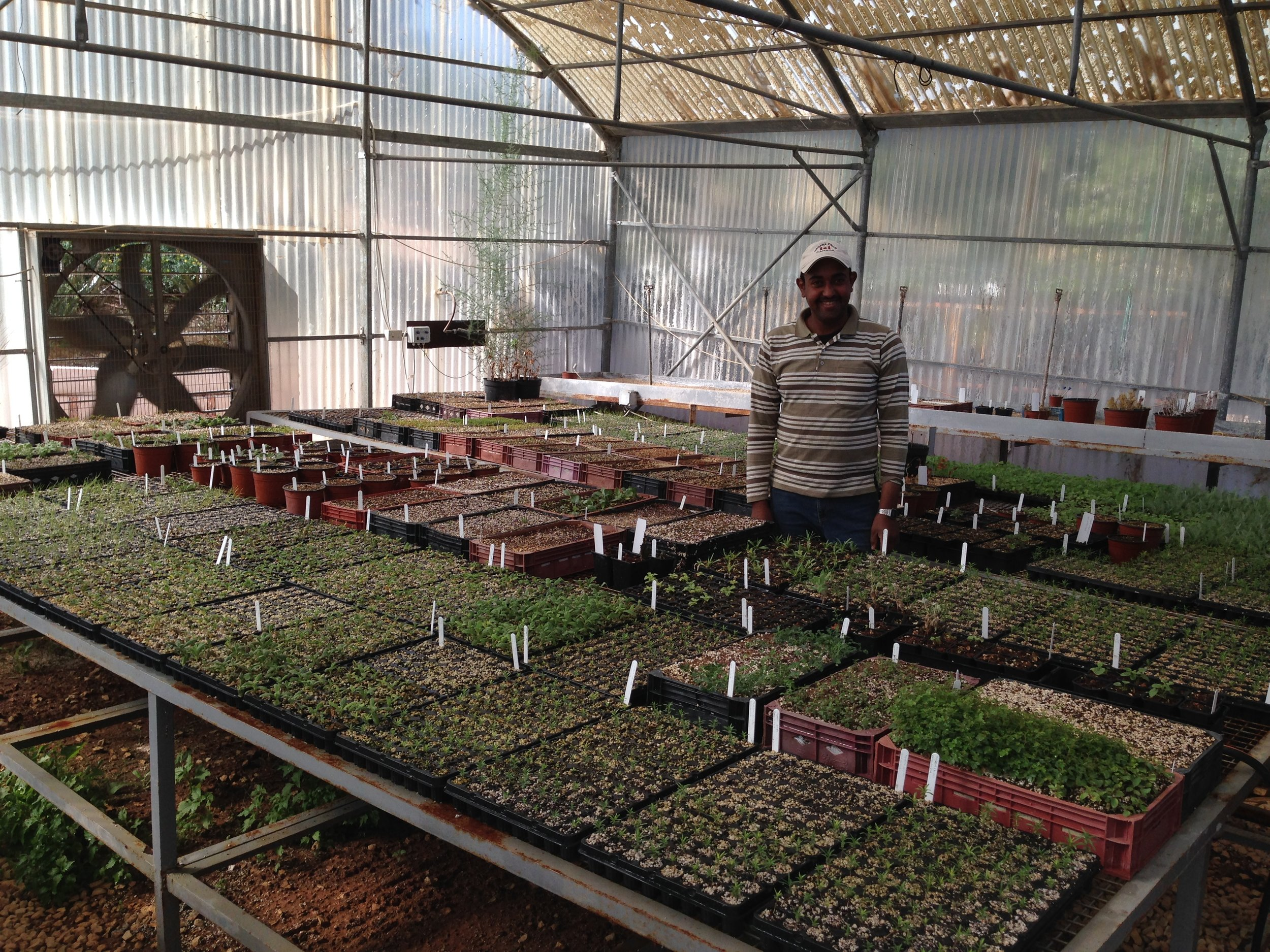 nursery-assistant-ibrahim-odeh-in-the-greenhouse-amongst-his-hard-work.jpg