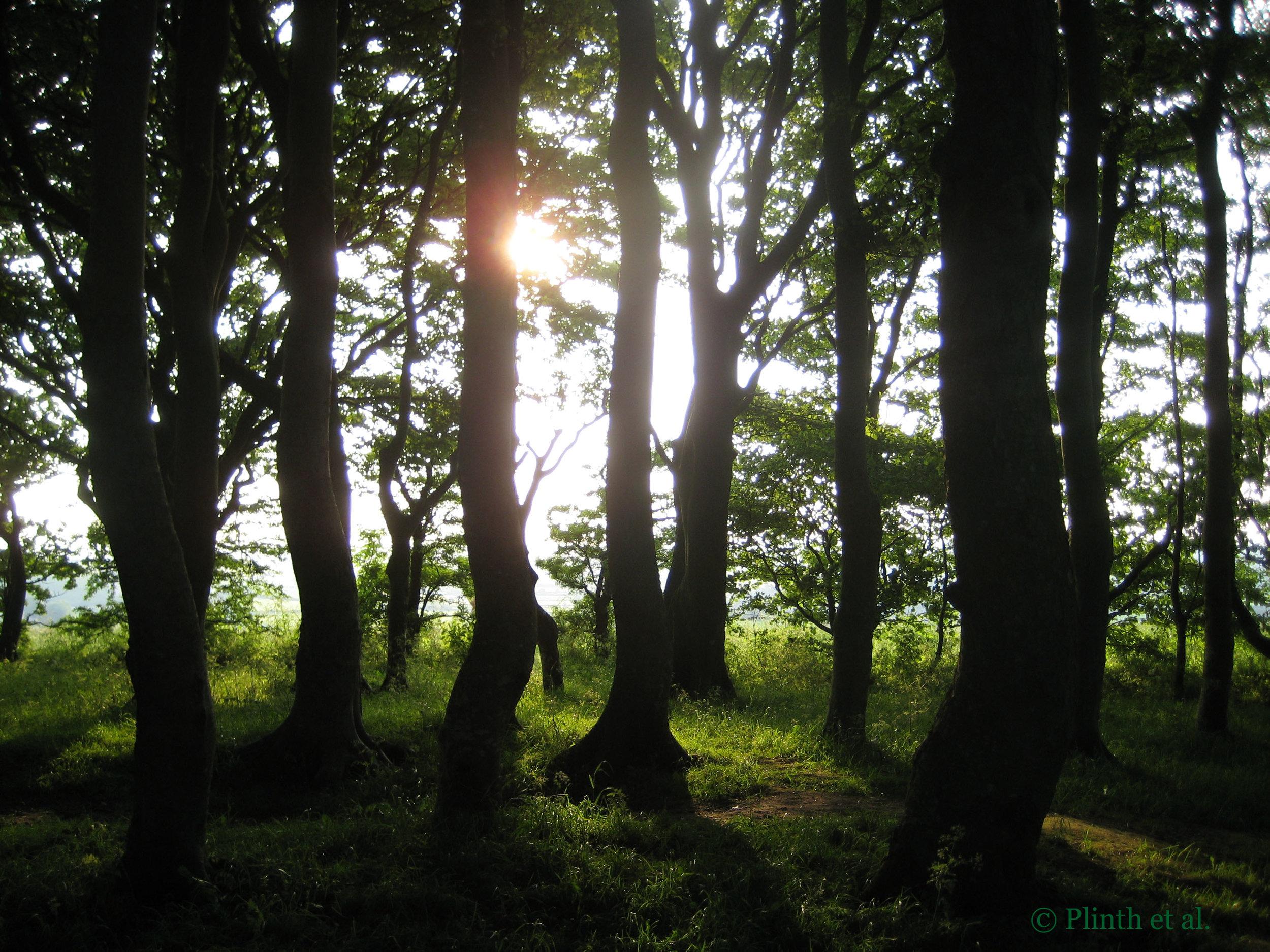 groveoftrees.jpg