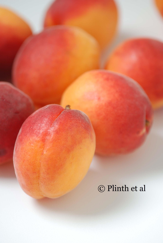 tasmanian-apricots-2.jpg