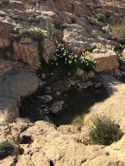 Pictured from a location off Highway 204 south of Dimona, Israel.