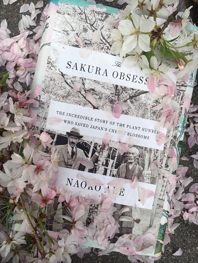 Sakura_Obsession.jpg