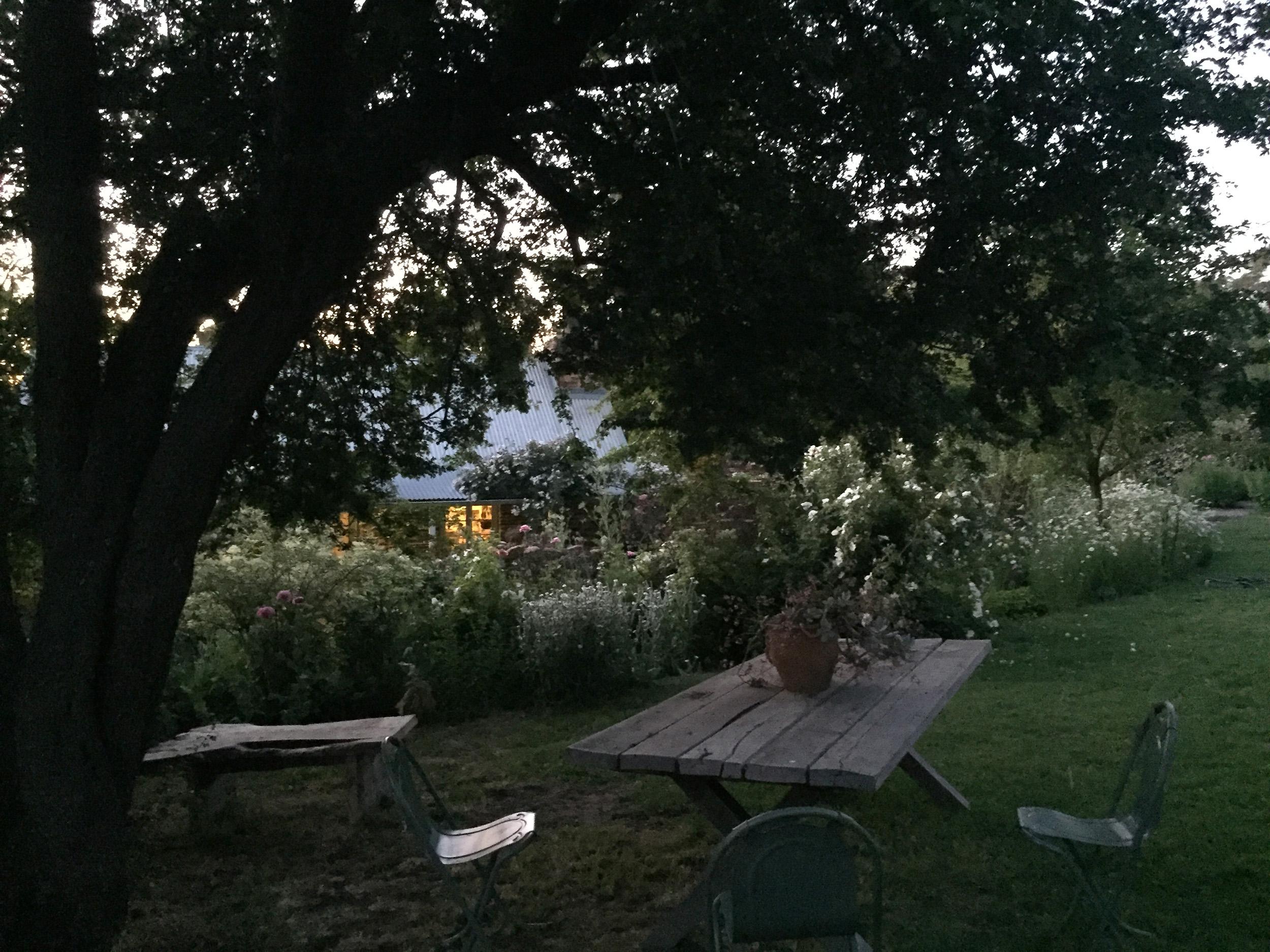 Morgan_Allender_garden4.jpg