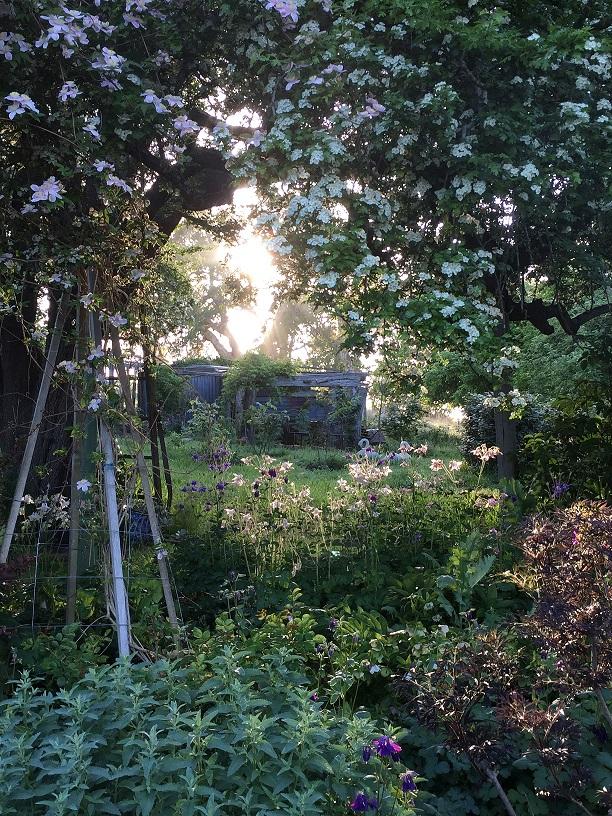Morgan_Allender_garden1RESIZED.jpg