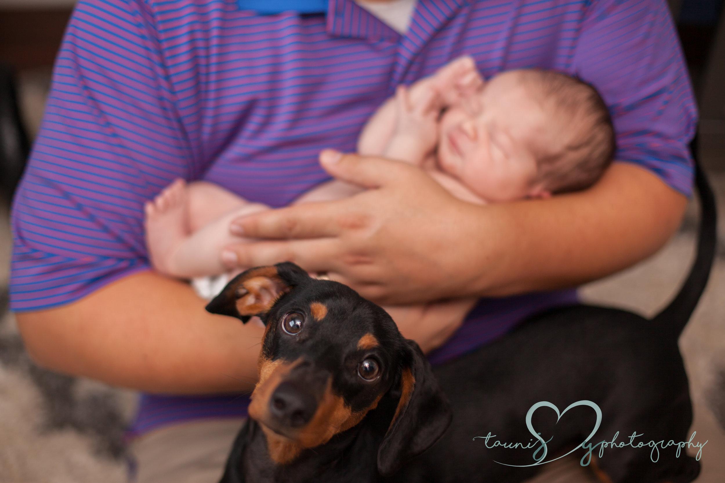 puppy photography Tauni Joy Photography