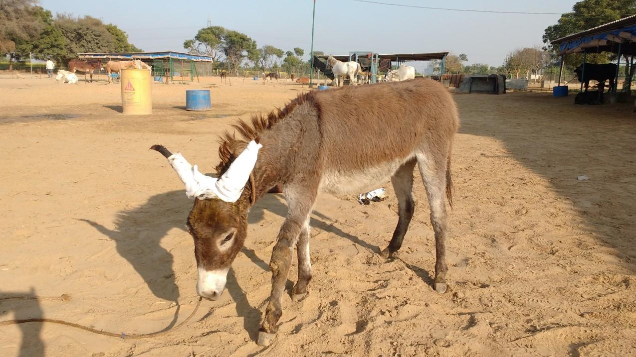 Jan + Feb 18 Rescue of Baby foal5.jpg