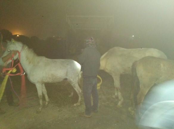 Jan + Feb 18 3 mules rescued 2.jpg