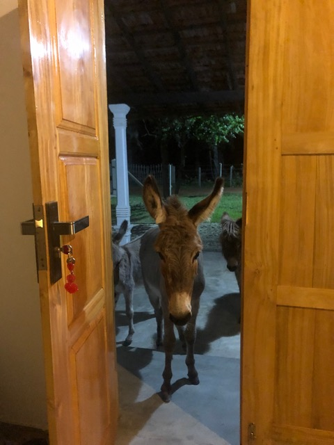 Can I come in.jpeg