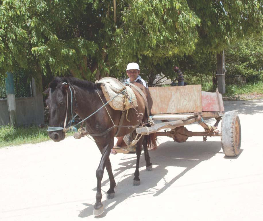 Horse (Sarteneja, 2013).jpg