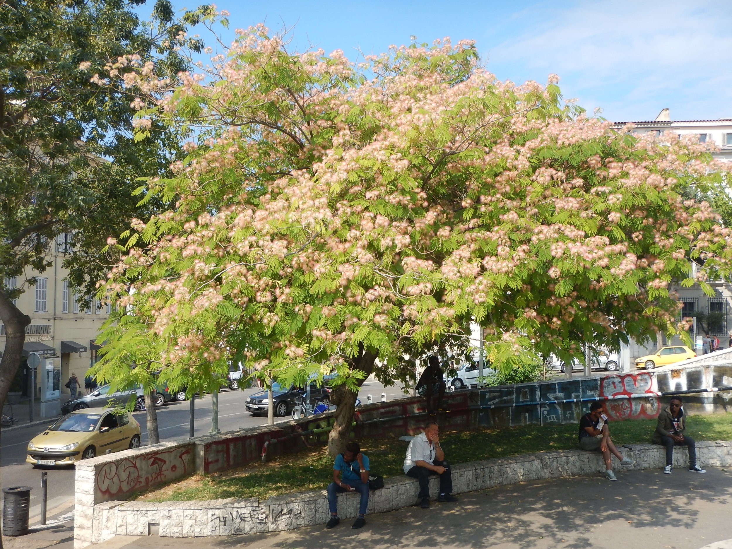 beautiful flowering tree at the bottom of the station steps.