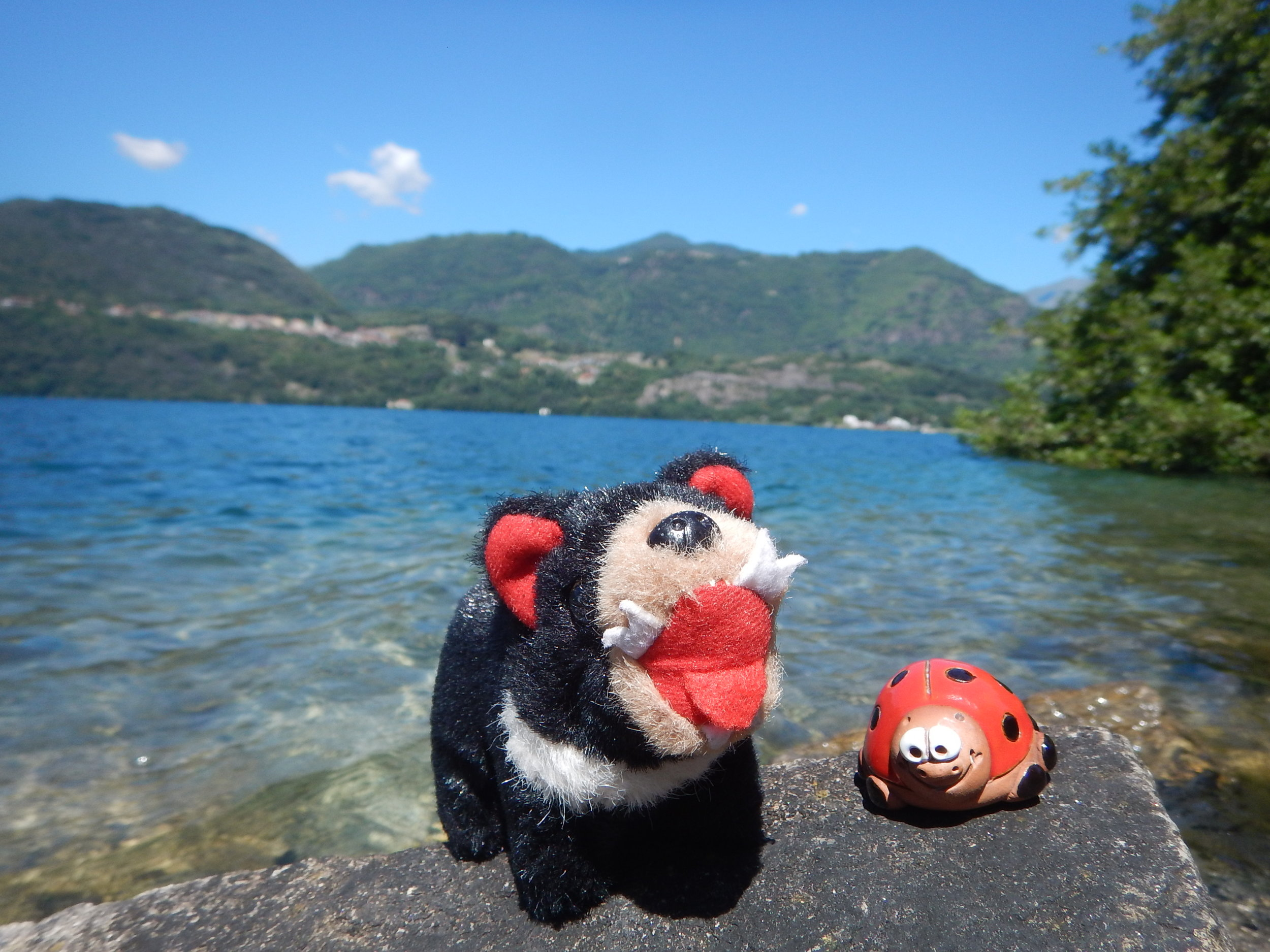 Harri has a companion for Italy. The little ladybird is from Montipulciano, a pressie from Debora after her visit there last year.