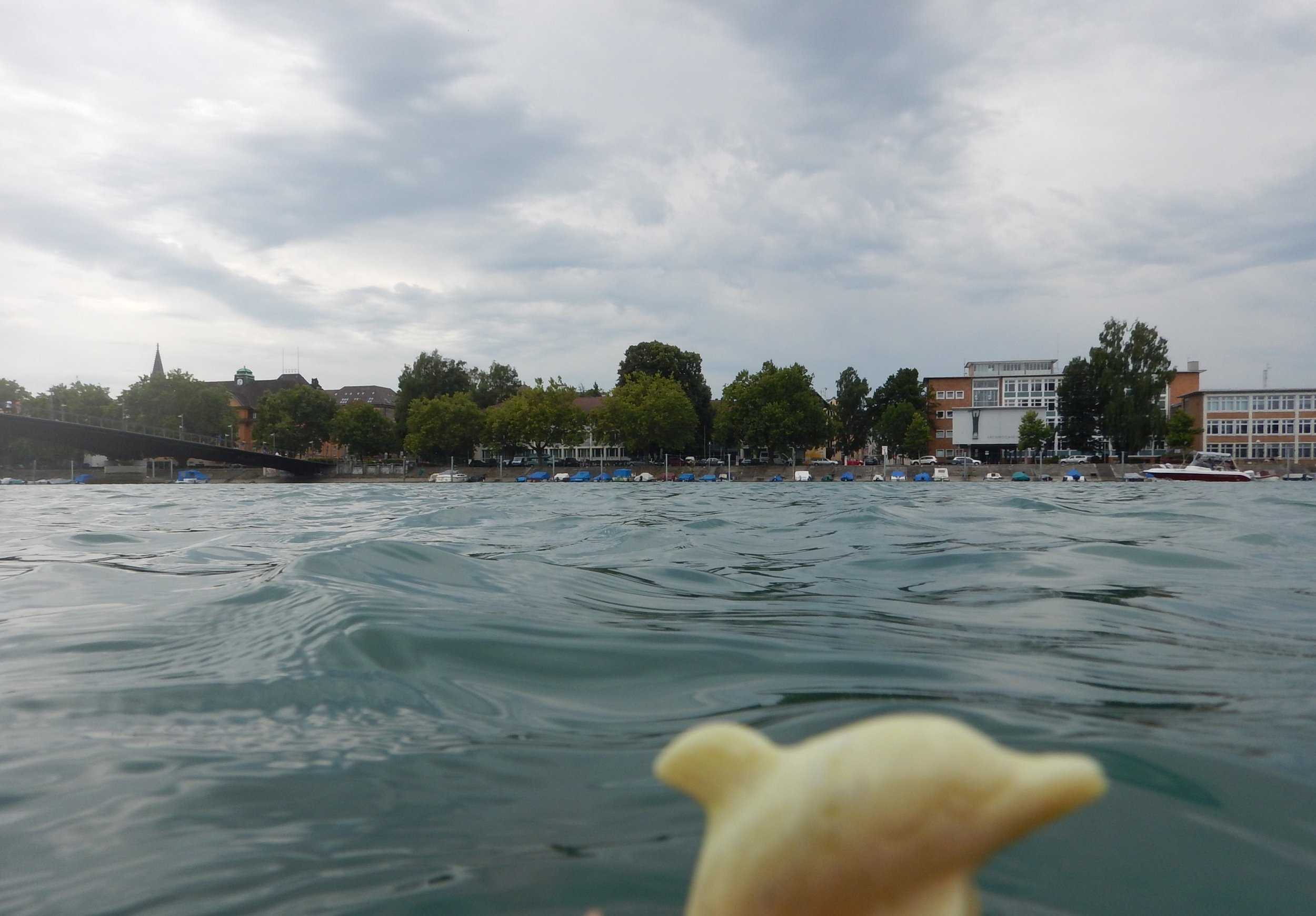 Swimming with dolphins in the Rhine River, Germany