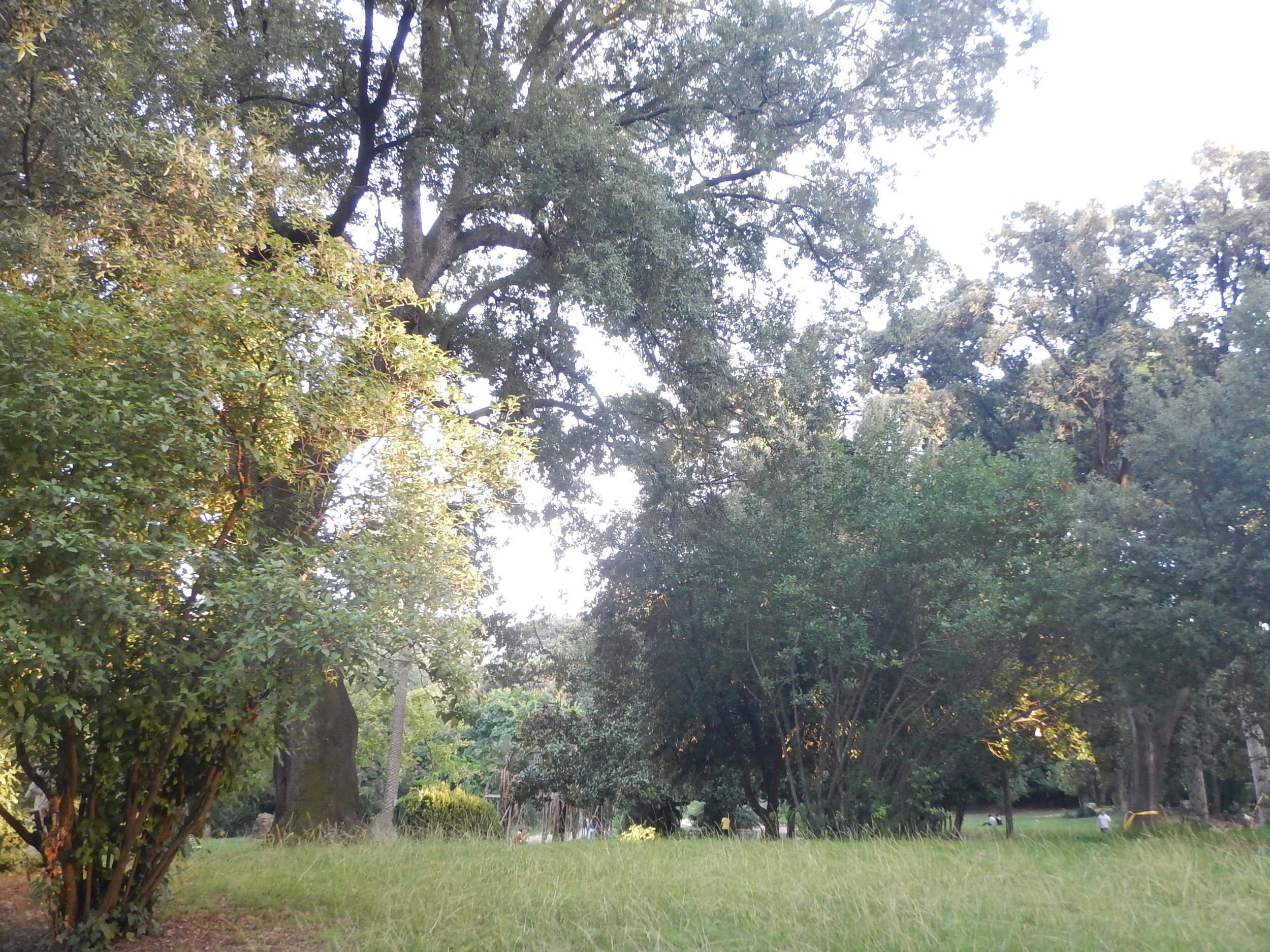 There is no longer any evidence of the gardens previous grandeur, other than the magnificent old trees towering over the unkept grassed areas.